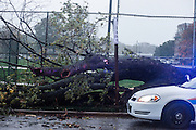 (photo by Matt Roth).Monday, October 29, 2012.Assignment ID: 10133655A..A Department of Defense Police officer guards a tree knocked down by hurricane Sandy winds at the U.S. Naval Academy in Annapolis, Maryland Monday, October 29, 2012.