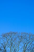 Tree branches and blue sky.