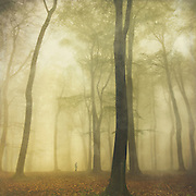 Misty beech tree forest in spring.<br /> <br /> Prints:http://society6.com/product/soliloquy-0aw_Print