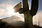 Winter storms bring rain and fog to Tucson Mountain Park, Sonoran Desert, Tucson, Arizona, USA.