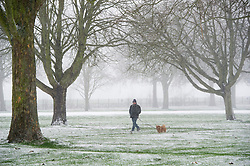 ©  London News Pictures. 18/01/2013. Windsor, UK. A man walking his dog in snowfall on the Long Walk in Windsor Great Park, Windsor on January 18, 2013. A blanket of snow is due to cover the UK causing major travel disruption. Photo credit : Ben Cawthra/LNP