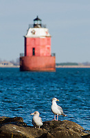 Seagulls rest on a jetty near the Sandy Point Shoal Light. The Lighthouse is a brick three story house on a caisson foundation that was erected in 1883. It lies about a half mile off Sandy Point, north of the Chesapeake Bay Bridge.