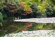 Japan, Kyoto, Ryoan-Ji Zen Buddhist temple,