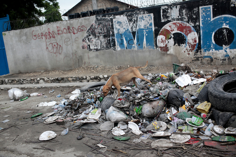 """July 2010 - A """"Haitian dog"""" rummages through garbage on the side of the road in Port-au-Prince, Haiti."""