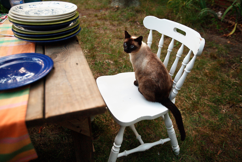 A cat sits on a chair next to a  picnic table with many empty dishes outside.
