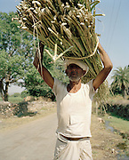 Man carrying wood to make rope, India