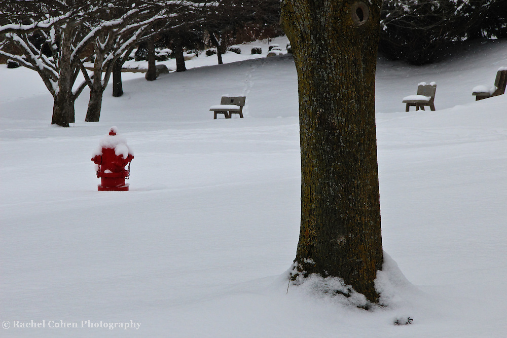 &quot;Seeing Red&quot;<br /> <br /> A bright sight on snowy day! A wonderful shiny red fire hydrant in a snow filled winter scene!!<br /> <br /> Winter in Michigan by Rachel Cohen Winter in Michigan!<br /> <br /> Beautiful winter scenes, winter wonderlands, and lone trees in winter!<br /> <br /> Images in color, B&amp;W, and using selective color.<br /> <br /> If you love winter, snow, trees, rolling hills, and lone trees then you'll find a lovely selection!! <br /> <br /> Winter in Michigan by Rachel Cohen