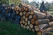 Woodpile in Rural Australia