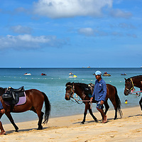 Three Horses Walking on Sand at Bangtao Beach in Phuket, Thailand <br />