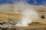 Cold Springs, Nevada Oct. 24, 2006 <br />  A helicopter chases horses into a hidden corral at the  Clan Alpine Herd Management area North of Highway 50 in Central Nevada during a BLM wild-horse gather.