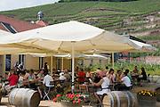 Weingut Schloss Wackerbarth, Gutsausschank, Restaurant, Gartenlokal, Radebeul bei Dresden, Sachsen, Deutschland.|.Castle Wackerbarth, vinery, restaurant, Radebeul near Dresden, Germany