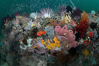 Colorful deep reef...Shot in Indonesia