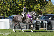 2018-03-14 Showing (Wed) - Rising Star Saddle Hunter