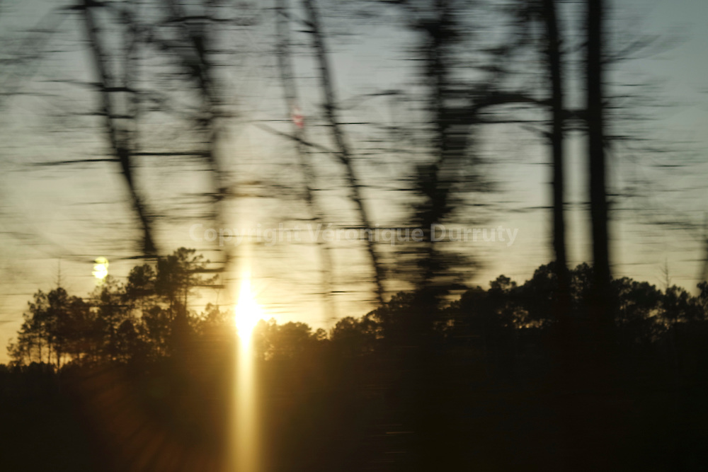 Lanscape in the Landes, at Twilight, France // Paysage des Landes au crépuscule, France