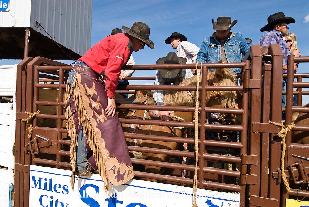 Rodeo, Saddle Bronc rider saddles up in chute, Miles City Bucking Horse Sale, Montana.