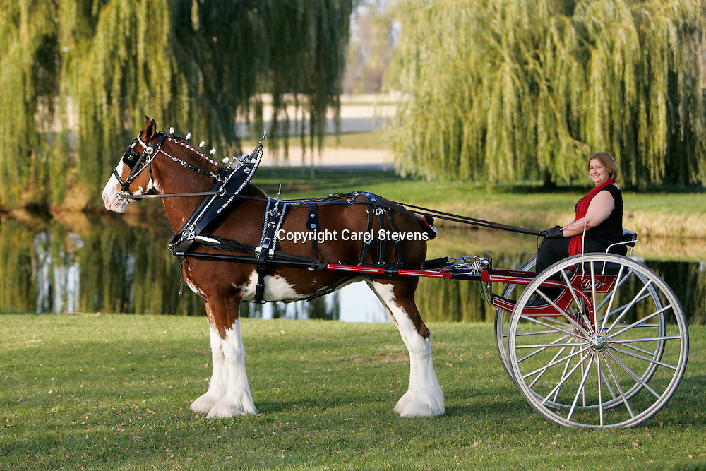 World Clydesdale Show 2011  Ladies' and Gent's Carts