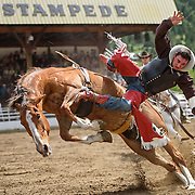 The Falkland Stampede-Bareback riding