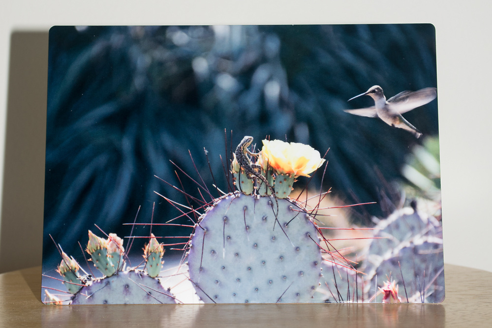 'Dance of the Hummingbird and the Lizard' photograph printed on metal.