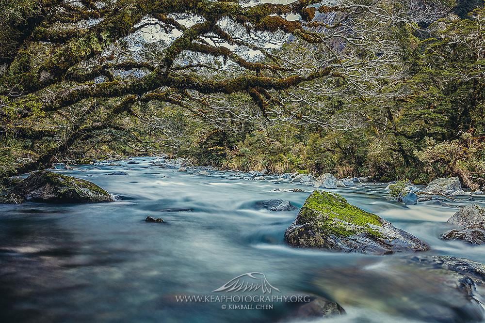 Hollyford River, Fiordland, New Zealand