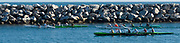Team of People Rowing in Outrigger Canoes in Dana Point Harbor
