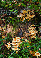 Fairy-like scenery. Colorful, slender mushrooms growing on a tree stump, surrounded by greenery.