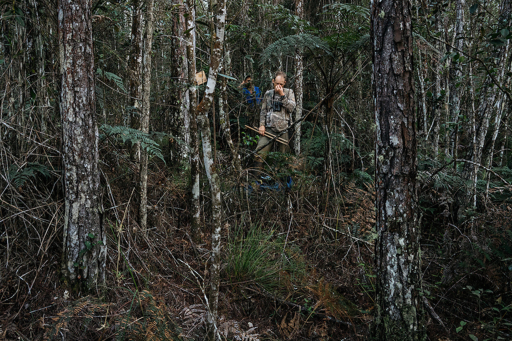 After using the double knocker and feedback call of the ivory-billed woodpecker, Martjan Lammertink waits to hear any response in Humbolt National Park in Eastern Cuba on Jan. 31, 2016.