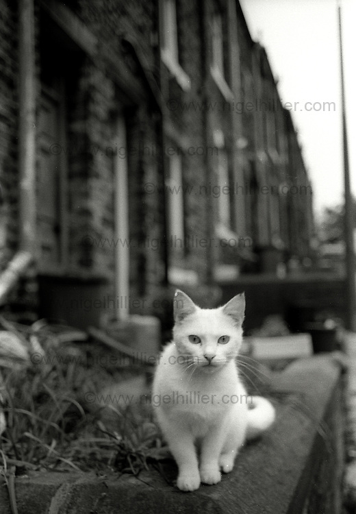 white cat, Hebden Bridge, 1986
