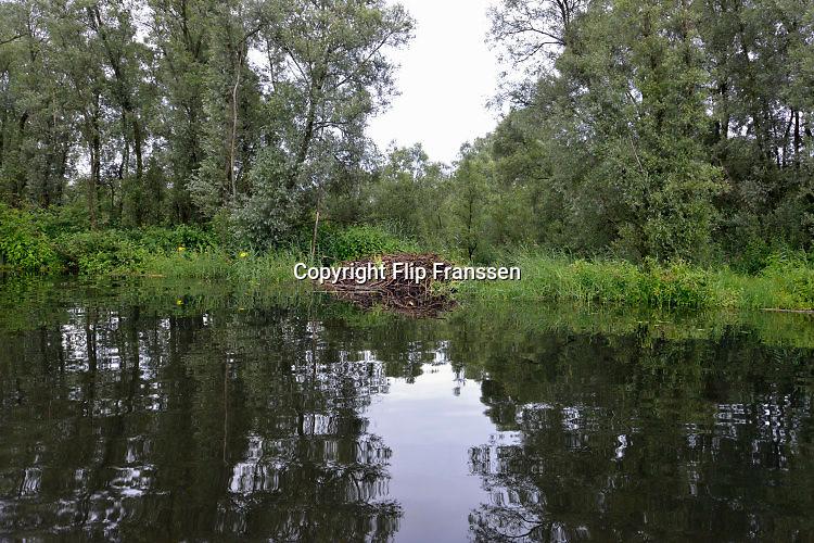 Nederland, Kekerdom, 21-6-2016Beversafari met kano in de Millingerwaard . Staatsbosbeheer gaat tochten per kano organiseren zodat belangstellenden de natuur in de Millengerwaard echt kunnen beleven. Doel is om bevers te spotten . Op de foto een beverburcht, hol  .FOTO: FLIP FRANSSEN