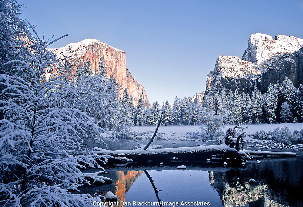 Snow Covered Trees & Bushes Frame Famed El Capitan and the Cathedral Rocks and the Merced River with Reflections on a Winter Day in Yosemite National Park California
