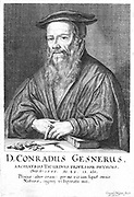 Conrad Gesner (1516-1565) Physician and naturalist. Practiced in Zurich until he died of plague. Engraving by Konrad Meyer (1618-1689) from a series of portraits of fellow citizens of Zurich.