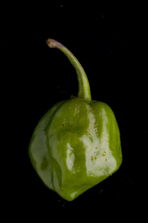 .Habanero Pepper (Capsicum sp.)