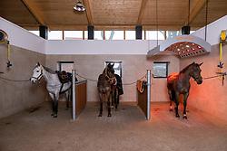 Stallgasse<br /> Holdorf - Homestory Jan Wernke 2020<br /> www.sportfotos-lafrentz.de/Stefan Lafrentz<br /> 19. Februar 2020