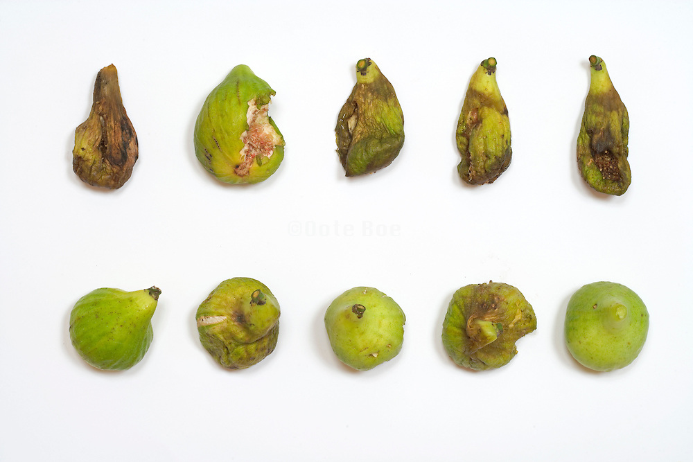 figs in various stages of rotting against a white background