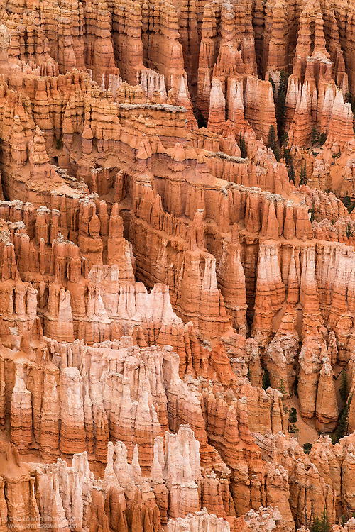 Hoodoos eroded from the Claron Formation  in Bryce Canyon National Park