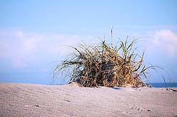Dune Study #1, Wrightsville Beach, North Carolina