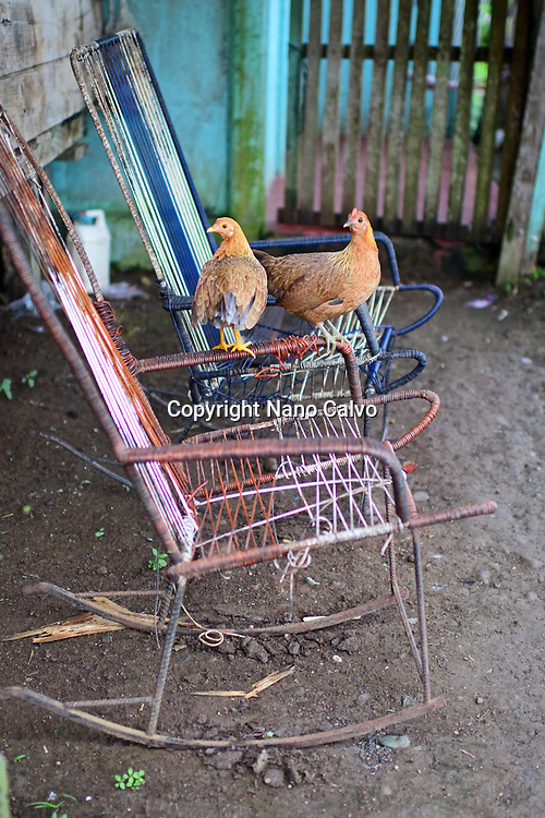 Couple of hens rest on chair. A day with the Bribri, indigenous people in Limón Province of Costa Rica