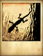 lizard on glass shower door cellphone photography,Iphone pictures,smartphone pictures
