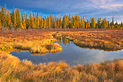 Wetland in autumn<br />