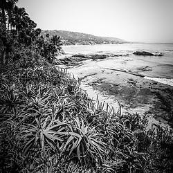 Laguna Beach black and white photo of the California coastline, Heisler Park flowers, and Pacific Ocean. Laguna Beach is a seaside beach city in Orange County in Southern California. Copyright © 2012 Paul Velgos with All Rights Reserved.