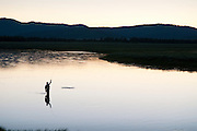 An angler plays a trout on the Henry's Fork (a.k.a., North Fork) of the Snake River near Island Park, Idaho.