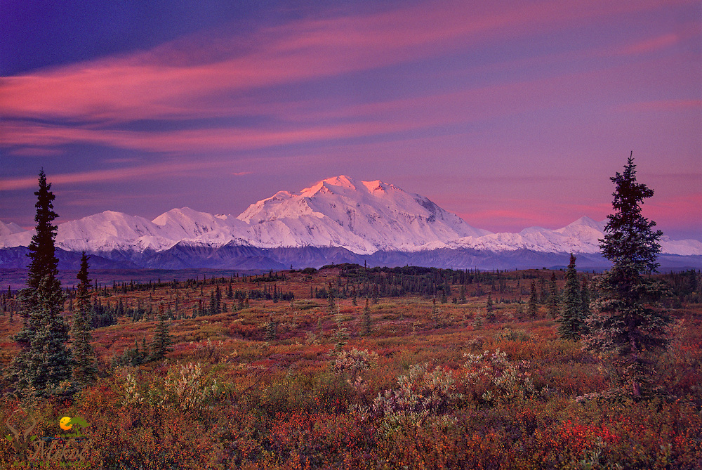 Clouds and Denail lit red by rising sun, Snowline atop denail descending as winter approaches