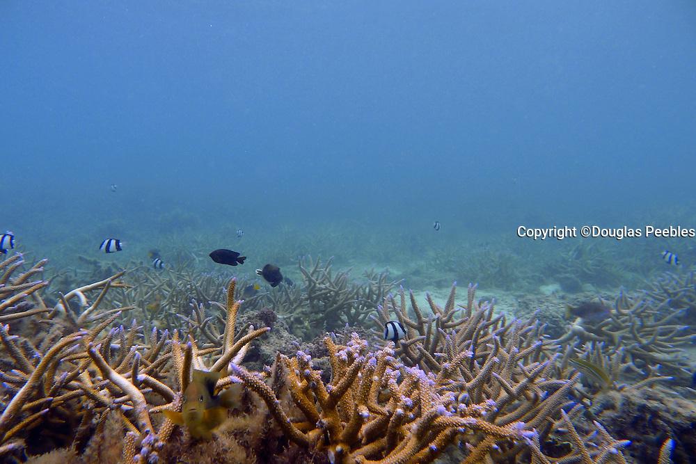 Snorkeling, Coral Reef, Yasawa Island Resort and Spa, Yasawa Islands, Fiji