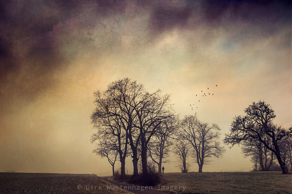 Painterly rural scenery with a group of trees at sunrise