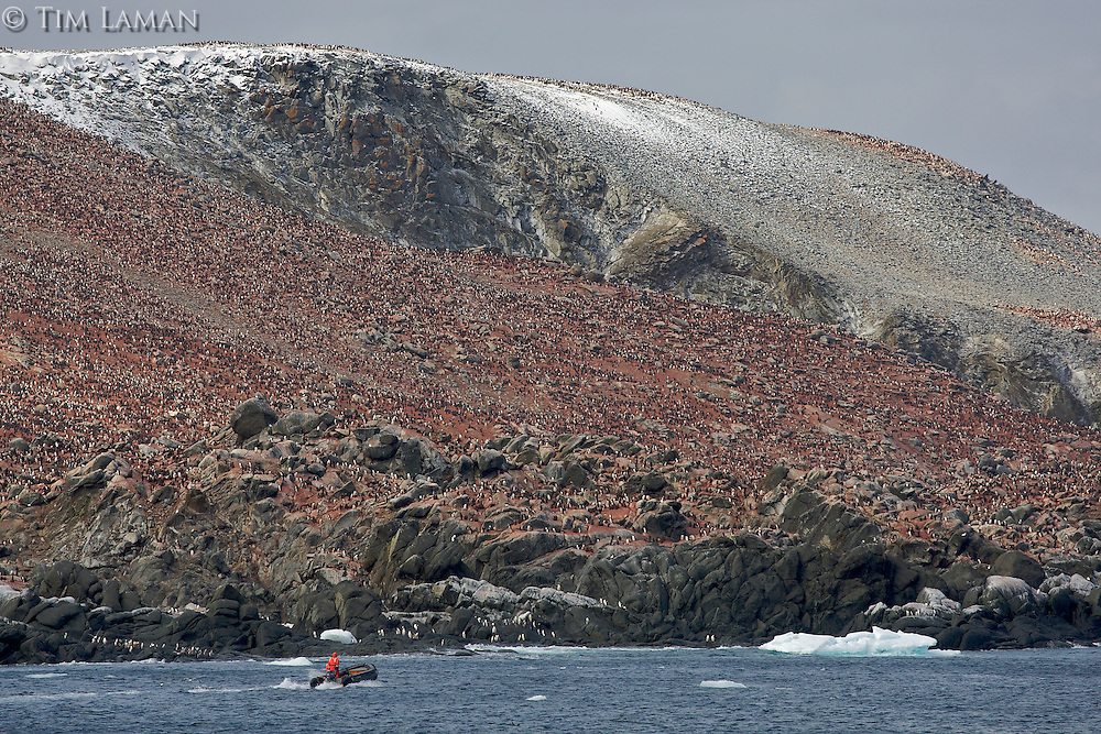 A zodiac approaches Heroina Island, Danger Islands, Weddell Sea, with a huge Adelie Penguin colony visible.
