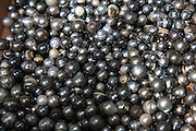 Black Pearls<br />