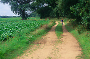 A089H4 Young boy cycling along Suffolk country lane England