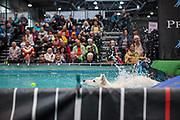 A participant during the qualification for the European Dog Diving Championship at the Leipzig Trade Fair. Over 31,000 dogs from 73 nations will come together from 8-12 November 2017 in Leipzig for the biggest dog show in the world.