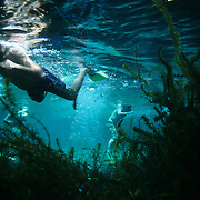 People snorkel in the gin-clear water of Ginnie Springs near Gainesville, Florida.