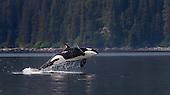 Alaska Wildlife Adventures