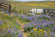 WA13088-00...WASHINGTON - An open gate in the lupine and balsamroot covered meadow at Dalles Mountain Ranch in the Columbia Hills State Park.